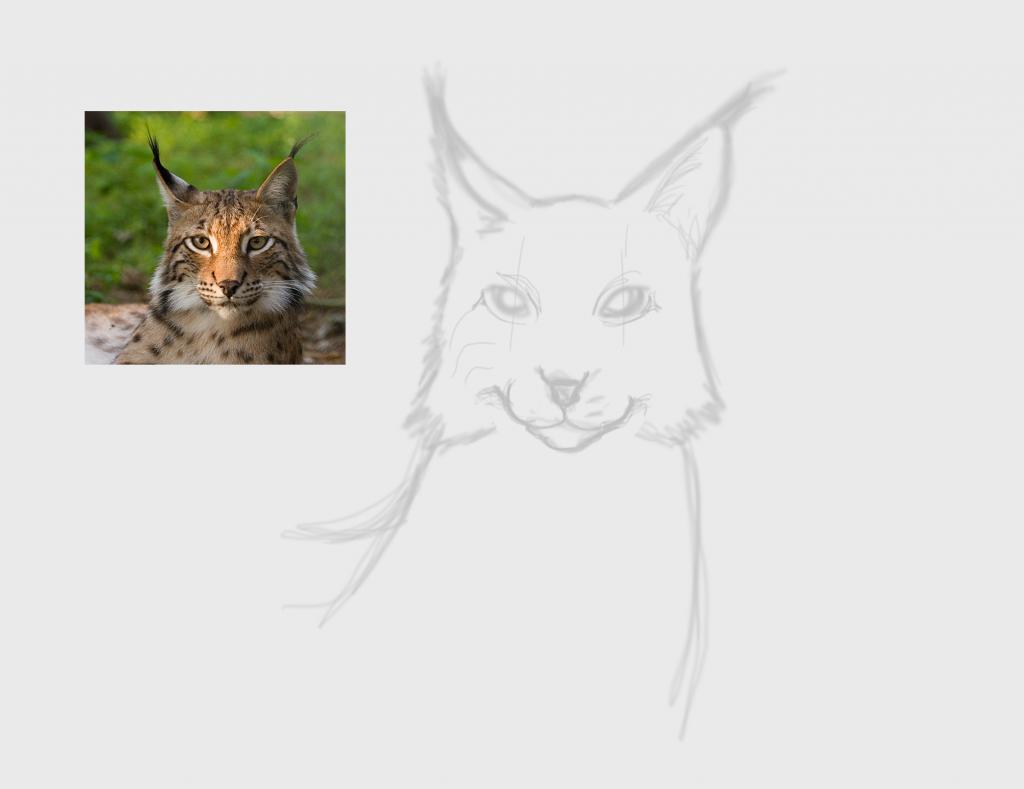 Lynx fase 1