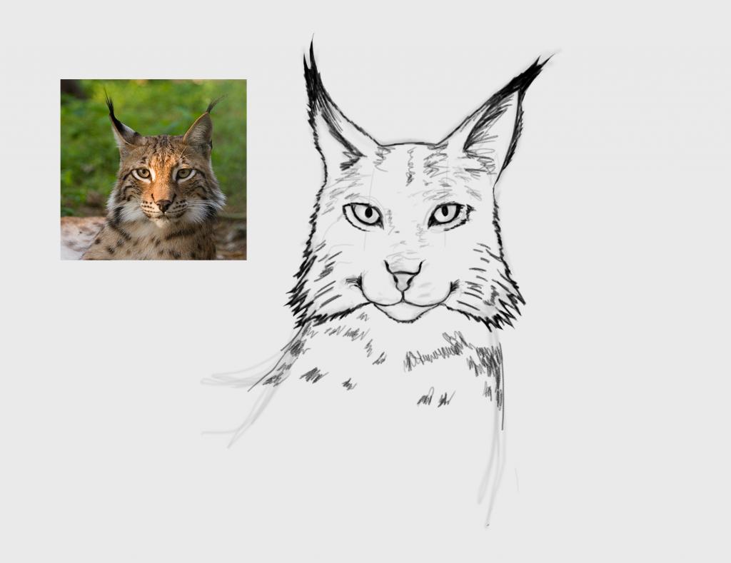 Lynx fase 2
