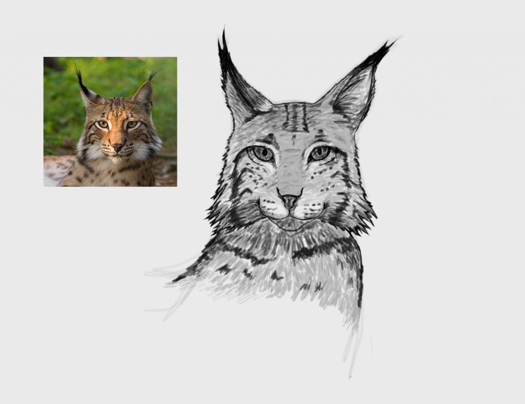 Lynx fase 3