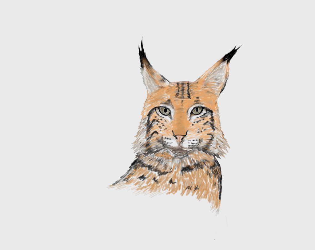 Lynx fase 4